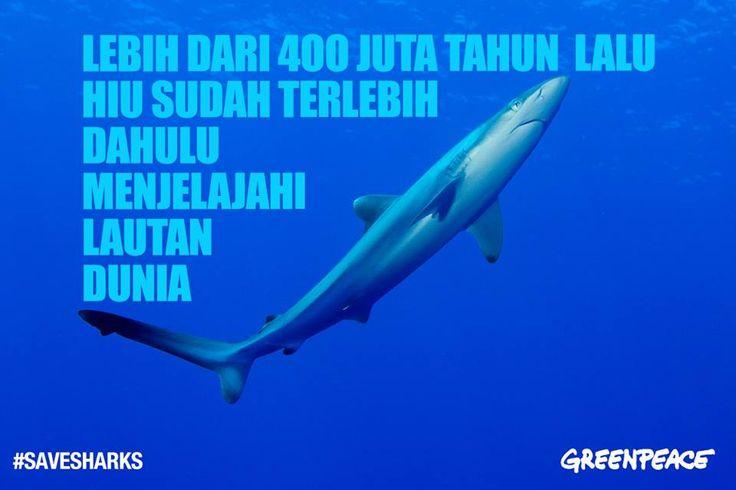 Tidak banyak spesies hewan seperti hiu yang mampu bertahan sejak jutaan tahun lalu dan masih ada hingga saat ini. Namun kini ditengah ancaman perburuan besar-besaran terhadap hiu, dan lemahnya perlindungan pada populasinya, akankah ia akan mampu bertahan untuk 100 tahun lagi? #SaveSharks