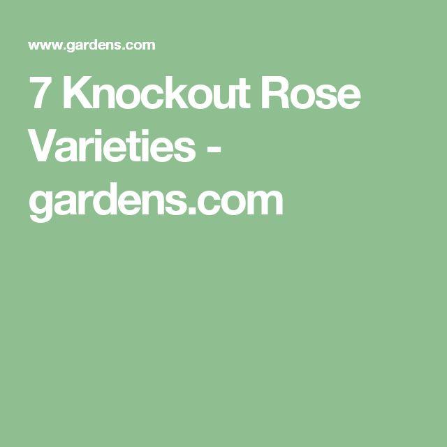 7 Knockout Rose Varieties - gardens.com