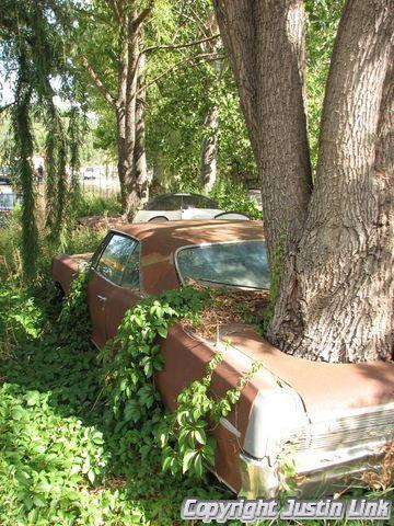 Tree growing through car at an old junkyard. More of trees growing through cars in my photostream.
