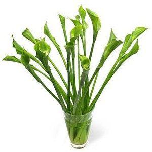 Green Goddess Calla Lilies - Flowerbud.com - Polyvore