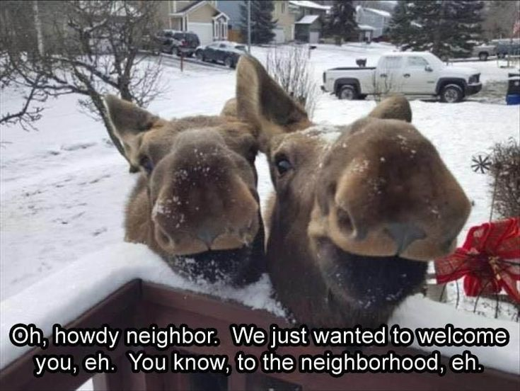Funny Animal Pictures Of The Day - 11 Images