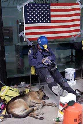 Image detail for -Remembering the search-and-rescue dogs of 9/11 « Merry Dogs Blog