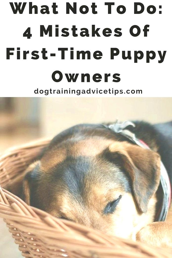 Dog Training When Teaching A Pet Dog To Sit Down Hold A Reward