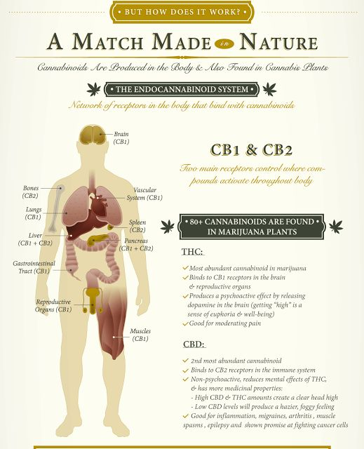 Daily Health Tips: What Cannabis Does To Your Mind & Body Depending On How…