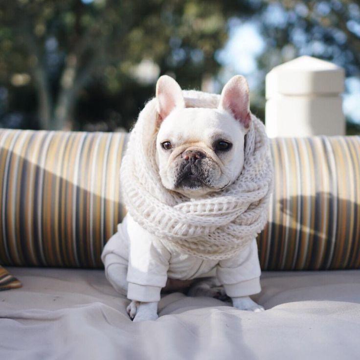 "P I G G Y & P O L L Y on Instagram: ""Finally able to wear some winter clothes. #SouthCarolina #HappyThanksgiving"""