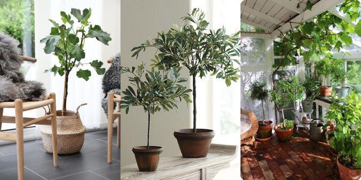 Udendørsplanter perfekt til dansk sommervejr