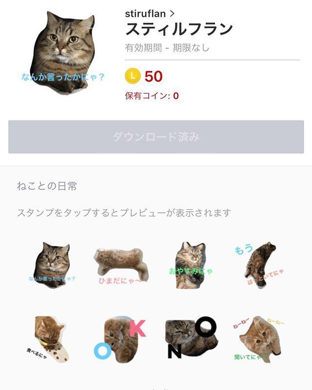 1時間足らずで作成したクオリティの低すぎるラインスタンプ💦笑 審査通したらまさかの承認されて発売開始致しました😽🐾❤️❤️笑 8個しか作ってないから、次はちゃんとフルで作ります٩( ᐛ )و 良かったら購入して下さいね★笑 https://line.me/S/sticker/1629096  #cat #cats #マンチカン #スティル #フラン #愛猫 #ラインスタンプ #発売中 #クオリティ低いw #次はちゃんとつくろ笑 #cute #animal #catstagram #nyanstagram #オシャレ猫 #linecreator #流行りのアプリ #ねこ好き #ねこ部 #みんねこ #にゃんすたぐらむ #share