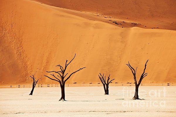 famous Deadvlei with dead trees, desert Landscape of Namib at Sossusvlei, Namib-Naukluft National Park, Namibia, Africa