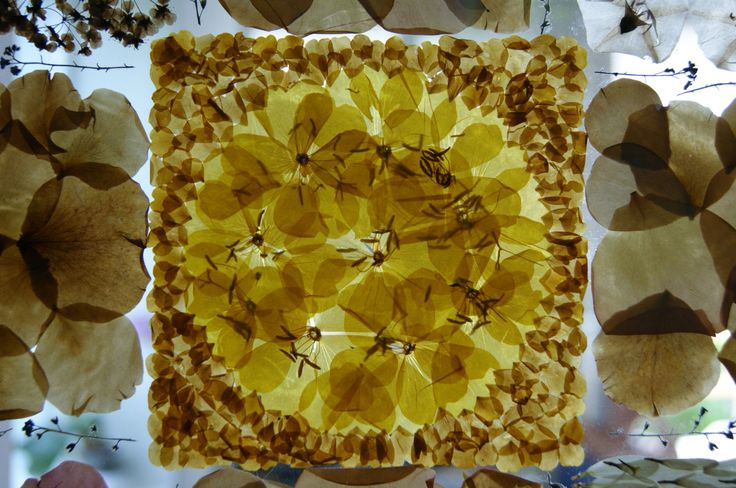 Sophie's garden (2014, leaves, petals, glue, glass, 200x40x4cm) Sophie's garden is a located work in the house of a good friend of mine. The work depicts an ideal garden inspired by the motive syst...