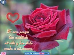 rosas hermosas con frases de amor dedicar