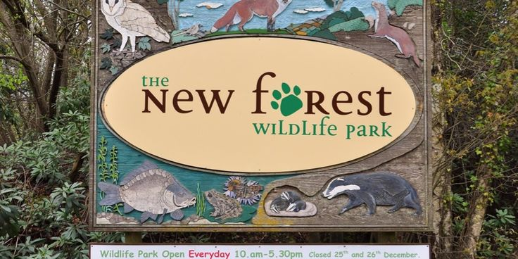 The New Forest Wildlife Park, a collection of indigenous species in their natural surroundings and a great day out for all the family.