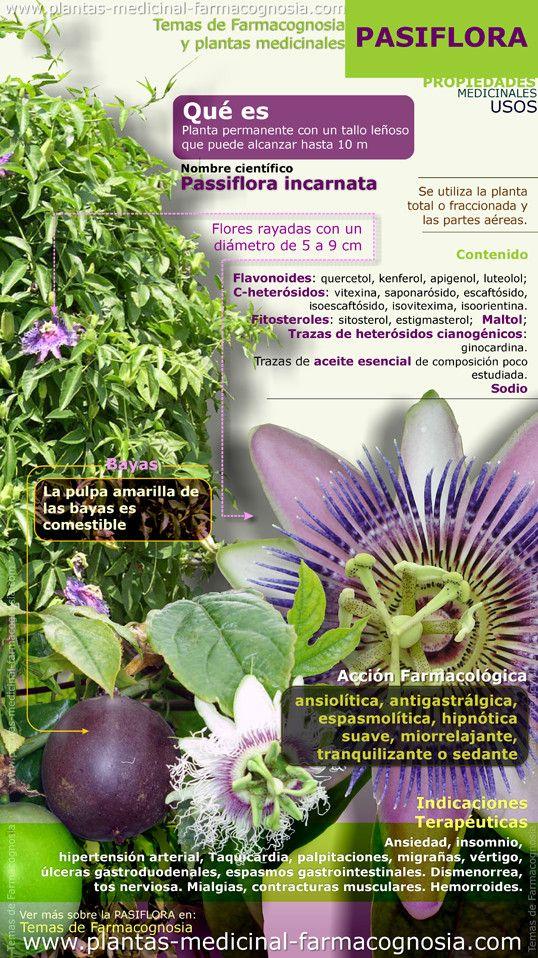 Pasiflora (maracuyá) propiedades y beneficios