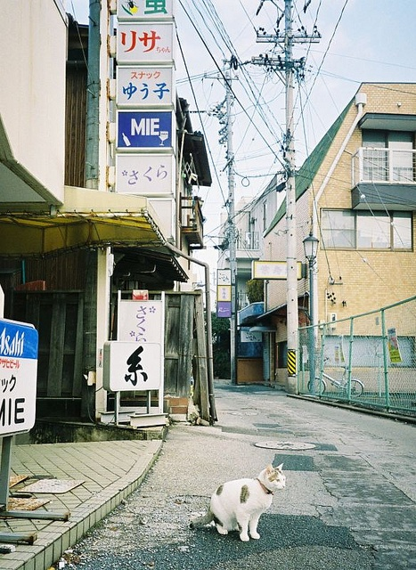 Cat in the street in Japan