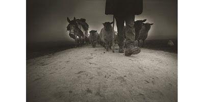 le promeneur du 68: Photographie : Marcel IMSAND à la Fondation Pierre Gianadda