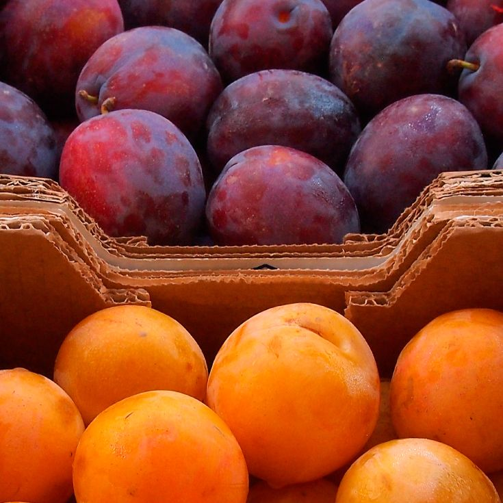 Plum Benefits Your Digestion