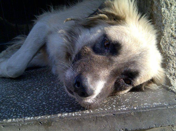 Romanian Dogs Need Urgent Adoption  Huffington Post.
