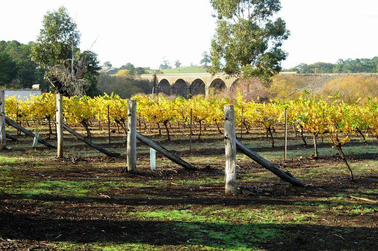 Birthday Villa Vineyard