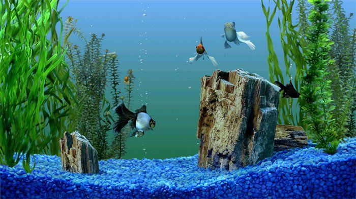 30 Fish Tank Background Printable In 2020 Fish Tank Aquarium Backgrounds Background