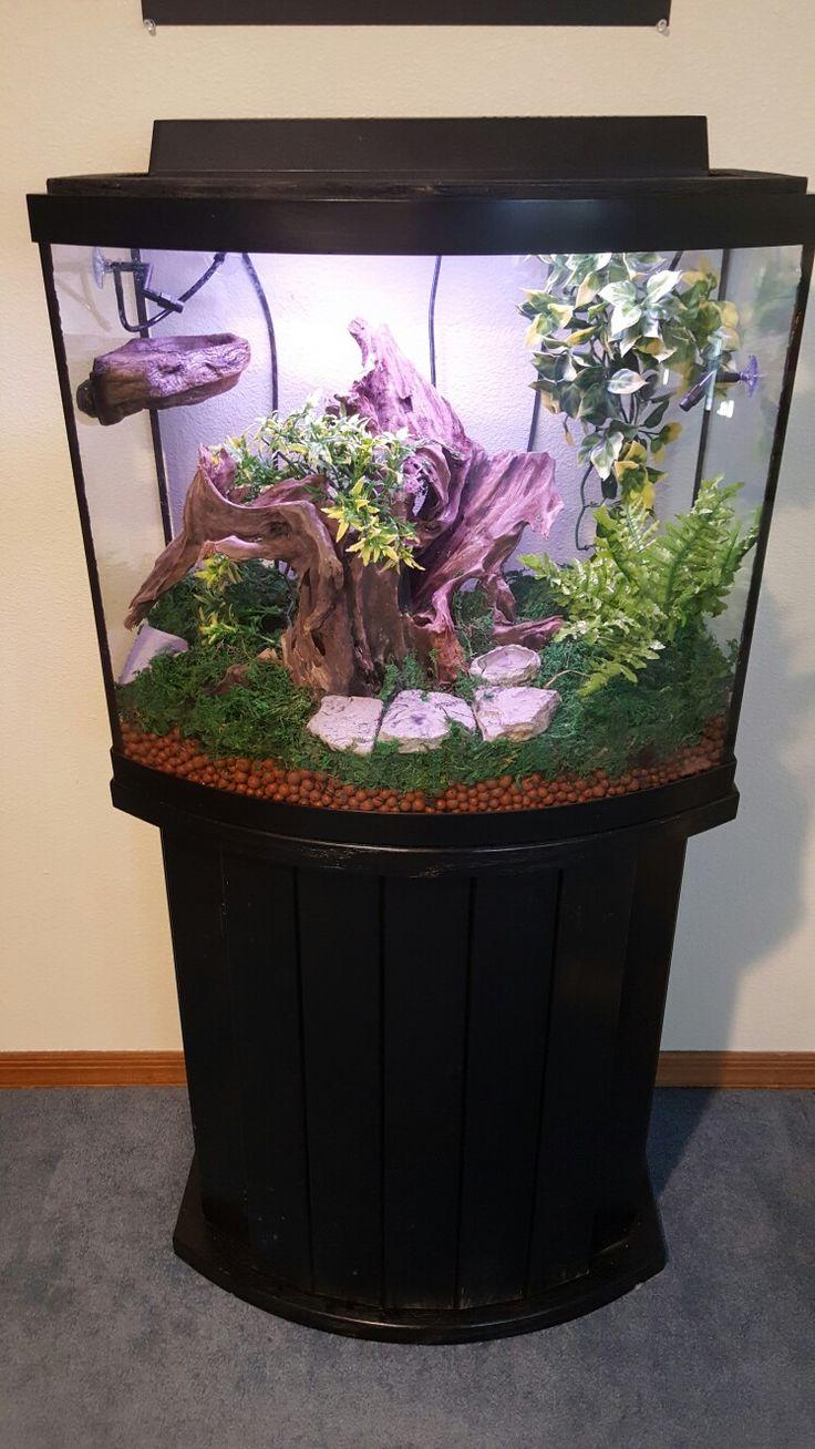 Crested Gecko Cage Setup 20 Gallon Tank Tree Frog
