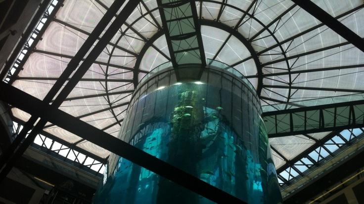 POLYMETHYLMETHACRYLAT – Im Fahrstuhl des Berliner AquaDom fährt man langsam 25 Meter durch das größte zylindrische Salzwasseraquarium der Welt nach oben und kann dabei rund 1.000 Fische aus 95 Arten bestaunen. Aufgenommen mit einem iPhone 4 und der App ProCamera.