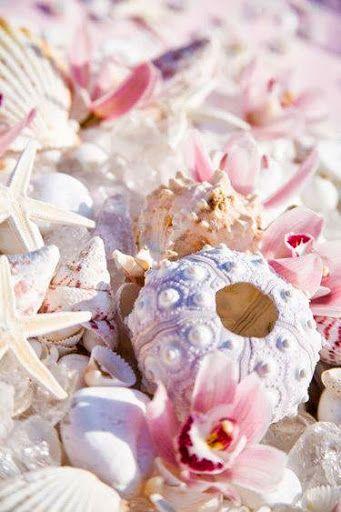 Pretty pastel seashells