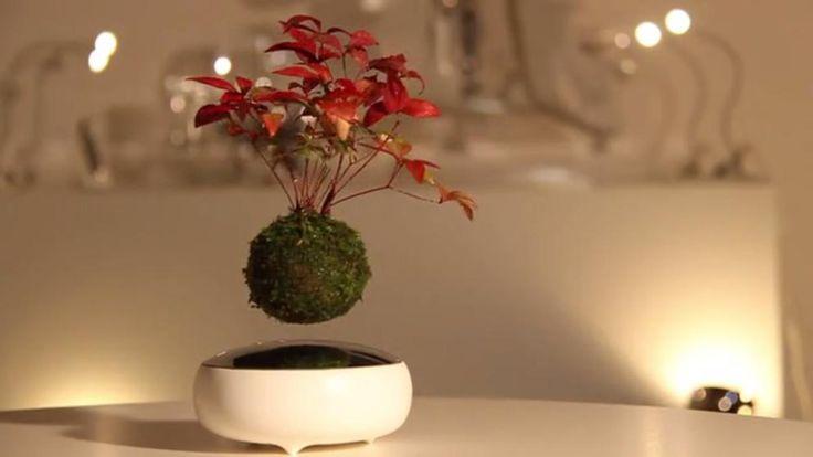 El bonsái flotante que sólo tienes 25 días para comprar