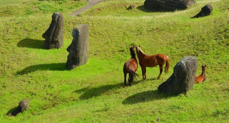 Caballos salvajes se mueven tranquilamente entre los fabulosos guigantes de piedra enterrados en la cantera del volcán Rano Raraku