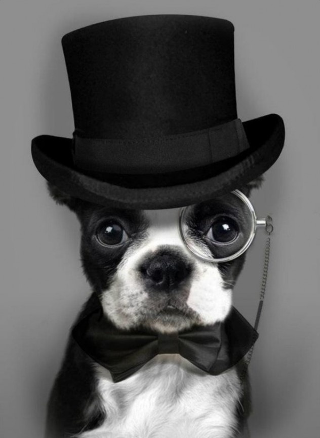 Ah! I want this pooch as my future ring bearer ^_^