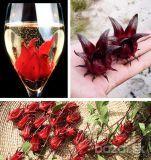 Ibištek krvavý - ROSELLA - Exotické jedlé kvety