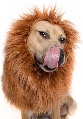 Lion Mane Costume and Big Dog Lion Mane Wig - Large Dog Costumes by Pet Krewe