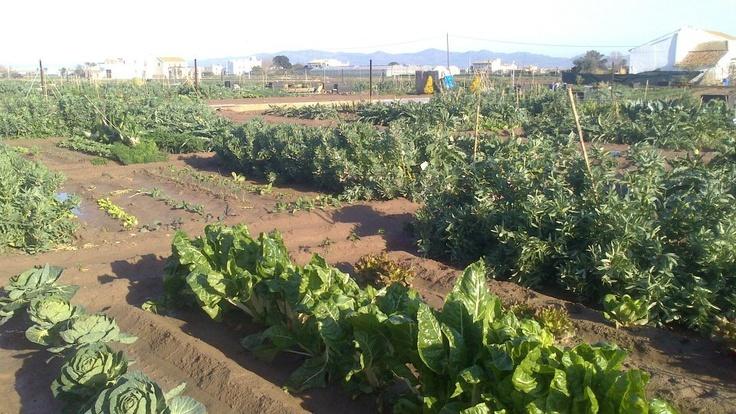 Lluvias en marzo, huertos empapados de las precipitaciones cercanas a la primavera en Alboraia, Valencia.