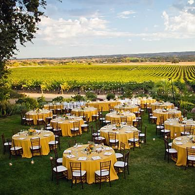 What a beautiful vineyard wedding setting!