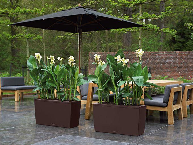 sichtschutz im pflanzk bel ist mit geh lzen gar nicht so schwer rosen clematis bambus. Black Bedroom Furniture Sets. Home Design Ideas