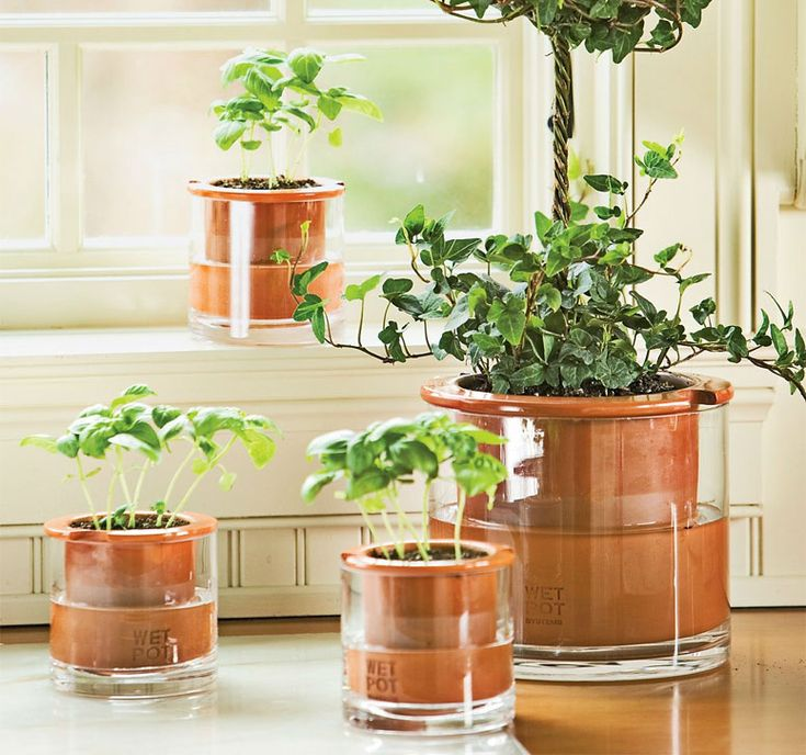 Wet Pots Allows Plants To Water Themselves The O Jays