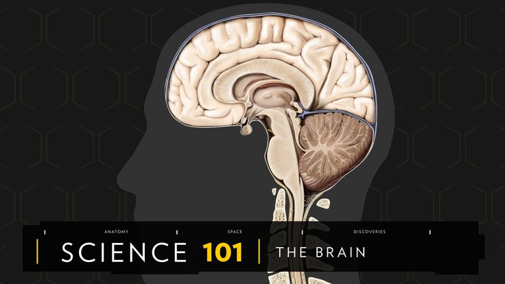 The brain constitutes only about 2 percent of the human body yet is responsible for all of the body's functions https://t.co/uhxXorZ3ah # #hairtransplant #hairturkey #hairtransplantturkey #hairstyle #hairnews #hair #hairloss