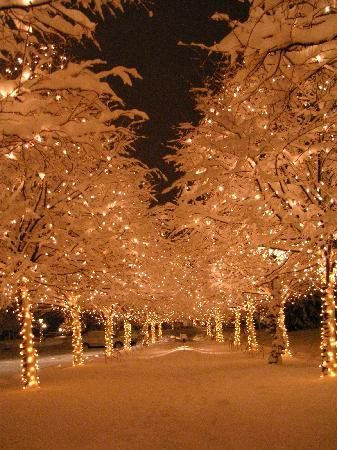 The Broadmoor: Christmas lights everywhere! Excel in the area of your interest.  http://youtu.be/bK7NUdh01WY