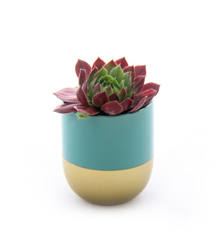 Limited Edition Gold and Teal Planter www.cloudninecreative.co.nz