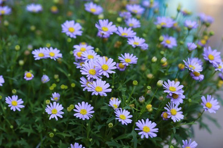 Top ten picks for making your your garden a native Australian bee haven.
