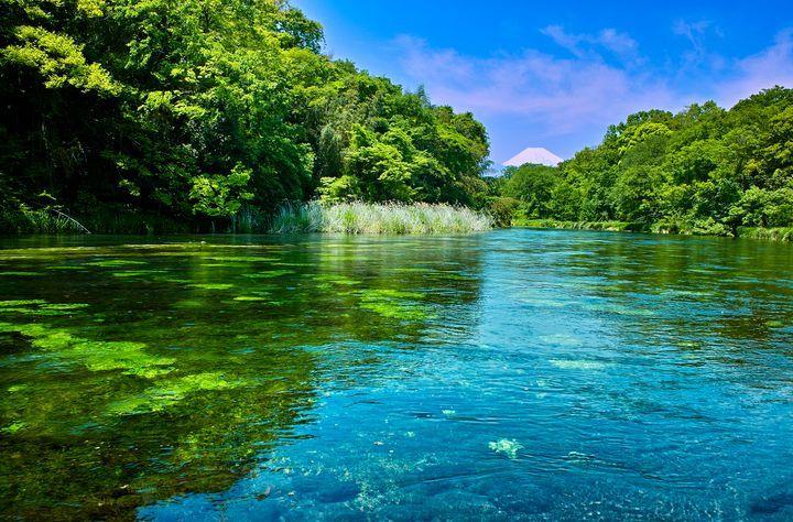 東京から約2時間、富士山の麓に、柿田川という小さな川があります。あまり名の通ってないのですが、日本三大清流の一つに数えられる程実は綺麗な川だそう。その湧き水は全部富士山に降った雨や雪。大自然が作ったその湧水群にいろいろな動物がやってきて新たな命が生まれます。