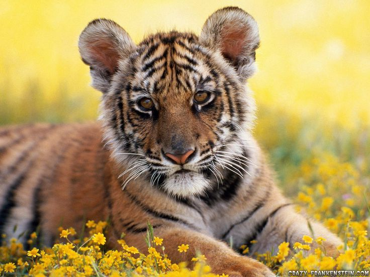 Collection of cute baby animal wallpapers Part cute baby ×