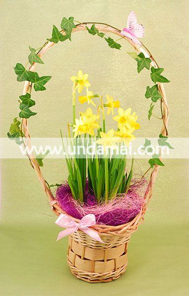 Aranjament floral cu narcise cu bulbi si iedera, in cos de rachita
