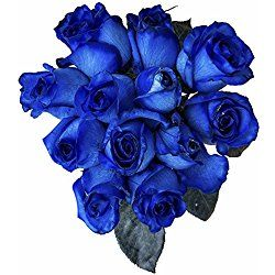 12 Stems - Fresh Cut Blue Roses from Flower Explosion, great for Valentine's Day