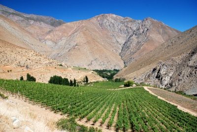 Vineyards of #Chile (Maipo Valley)
