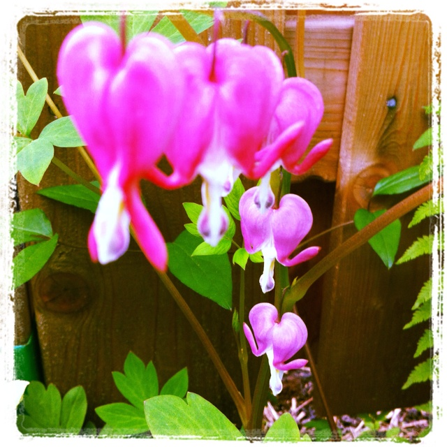 May Garden -- Day 12