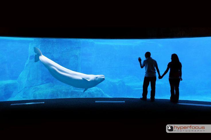 Vancouver Aquarium Vancouver Pinterest