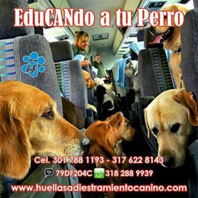 EduCANdo a tu Perro http://www.anunico.com.co/anuncio-de/animales_mascotas/educando_a_tu_perro-7128518.html