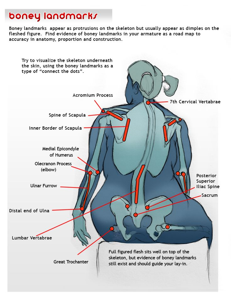 The the landmarks in the human