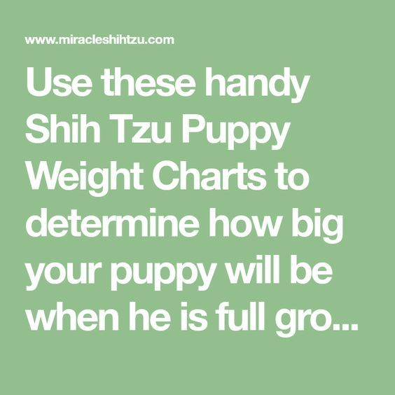 Shih Tzu Puppy Weight Chart Calculate The Adult Size Of A Tzu