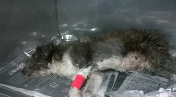 Injured On Kill List Must Out Now Located At Miami Dade County Animal Services Https Www Facebook Com Urgentdogsofmiami Photos Pb 19185975751510 Hering