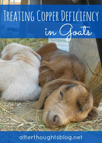 Treating Copper Deficiency in Goats | Afterthoughts: A Thoughtful Blog for the Classical, Charlotte Mason Mama
